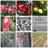 随州广水桃树苗多少钱