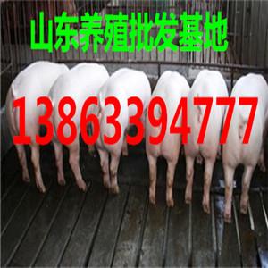 黑龙江双鸭山仔猪价格行情