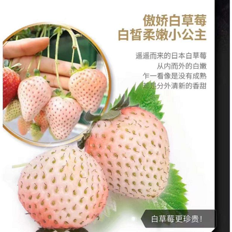 金昌章姬草莓苗种植方法