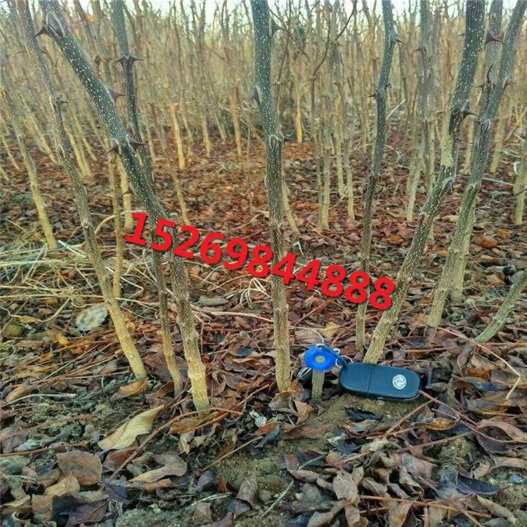 通过修剪,使花椒合理的树体结构,充分利用空间,光照及营养条件,以达到