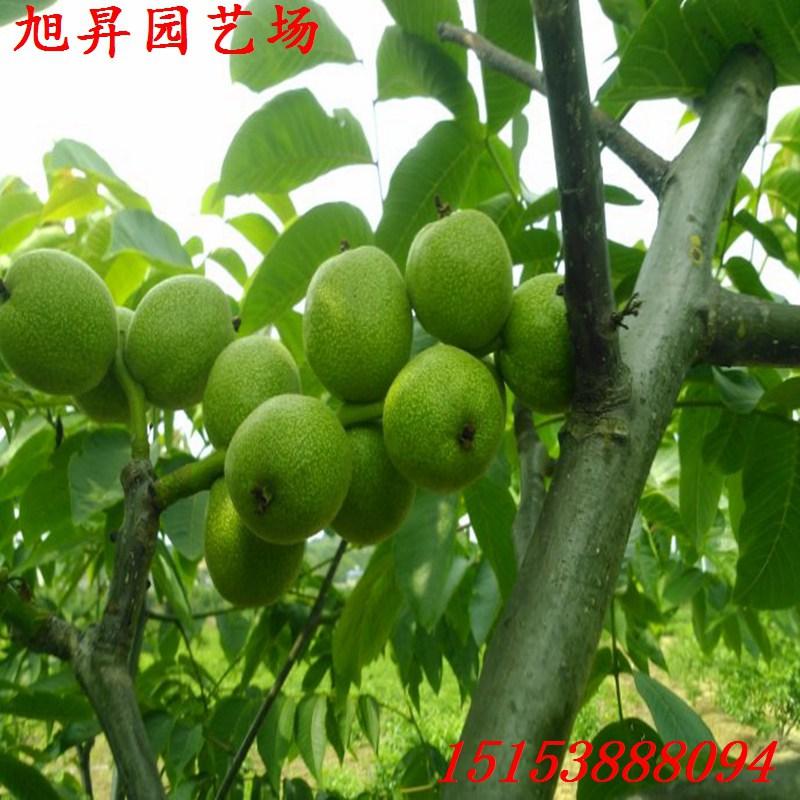 第二种是自然开心形也称为无主干形:一般有2~4个主枝.