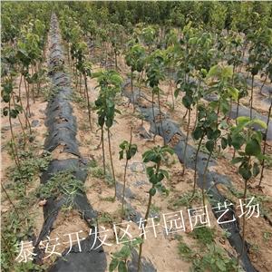 忻州营村地图