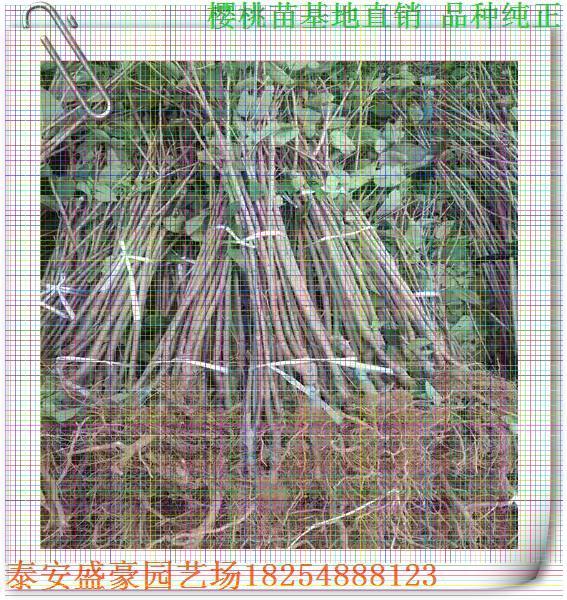 小树简笔画图片带颜色