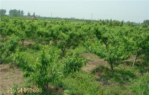 河南各地区风景图片