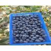 湖南地栽薄雾蓝莓苗价格